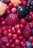 wymieszać owocna Fotografia Royalty Free