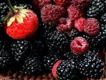 wymieszać owocowych Fotografia Royalty Free