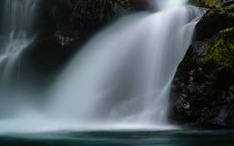 Wynoochee Spada W Olimpijskim lesie państwowym zdjęcia royalty free
