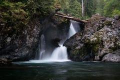 Wynoochee Spada W Olimpijskim lesie państwowym zdjęcia stock