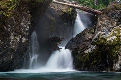 Wynoochee Spada W Olimpijskim lesie państwowym obraz stock