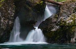 Wynoochee Spada W Olimpijskim lesie państwowym obraz royalty free