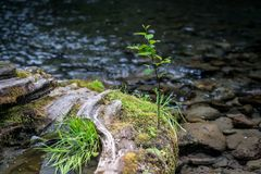 Wynoocheedalingen van Olympisch Nationaal Bos stock afbeeldingen