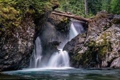 Wynoocheedalingen van Olympisch Nationaal Bos stock foto