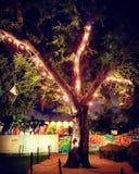 Wynwood, Майами Стоковая Фотография RF