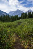 Wyoming berg ovanför ett fält Royaltyfri Bild
