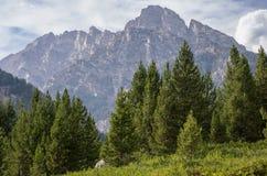 Wyoming berg som står högt ovanför träd Arkivbild