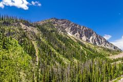 Wyoming Butte in Summer. Wyoming butte and mountainside with evergreen trees and blue sky with white clouds stock photos