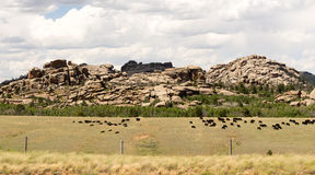 Wyoming Cattle Ranch Livestock Cows Beef Farm Rock Butte Stock Image