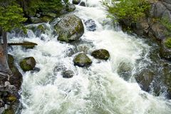 Wyoming Forest Stream Royalty Free Stock Image