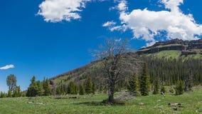 Wyoming Mountain Meadow Stock Photo