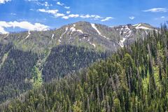 Wyoming Mountainside in Summer. Wyoming mountainside with evergreen trees and blue sky with white clouds royalty free stock photos