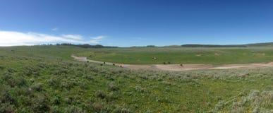 Wyoming slättar Arkivbild