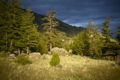 Wyoming Wilderness Royalty Free Stock Photography