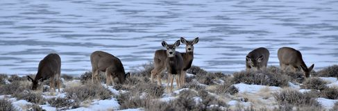Wyoming Wildlife Stock Images