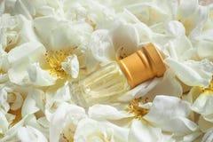 Wypachniony róża olej Naturalny olej dla relaksu na kwiecistym tle obraz royalty free