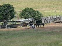 Wypasa krajobraz z drzewami i ogrodzeniami w Wschodnim Australia Zdjęcia Royalty Free