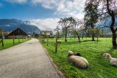 Wypasa w małej wiosce w Alps Obraz Royalty Free