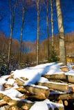 wypiętrza drewno fotografia royalty free
