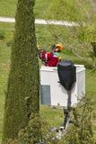Wyposażający pracownik przycina drzewa na żurawiu Uprawiać ogródek Zdjęcie Stock