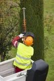 Wyposażający pracownik przycina drzewa na żurawiu Uprawiać ogródek Zdjęcia Stock