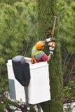 Wyposażający pracownik przycina drzewa na żurawiu Uprawiać ogródek Fotografia Stock