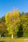 Wyróżniający jesieni drzewo 2 zdjęcie royalty free