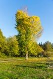 Wyróżniający jesieni drzewo 5 obraz royalty free