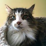 Wyróżniający Koci zdjęcia stock