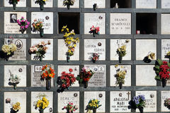 Wyrównujący nagrobki w cmentarzu z różowymi tulipanami przed headstones Obrazy Stock