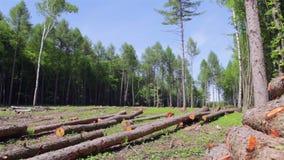 wyrąb lasów zdjęcie wideo