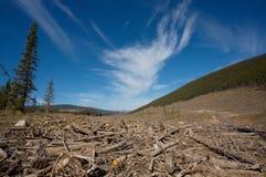 wyraźny las Zdjęcie Royalty Free