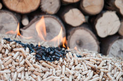 Wyrka Biomass Zdjęcie Stock