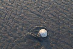 Wyrzucać na brzeg piaska dolar w czasie odpływu morza zdjęcie stock