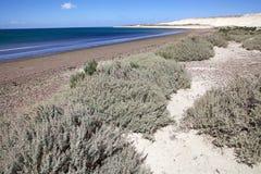 Wyrzucać na brzeg blisko Puerto Madryn, miasto w Chubut prowinci, Patagonia, Argentyna zdjęcie royalty free