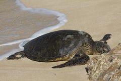 Wyrzucać na brzeg Denny żółw Fotografia Stock