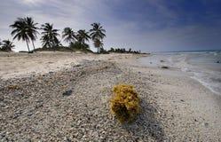 wyrzucać na brzeg kubańskiego del Mar Maria Santa obrazy stock