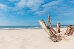 Wyrzucać na brzeg na morzu bałtyckim z widokiem morza z starym niebieskim niebem i drzewem obrazy stock