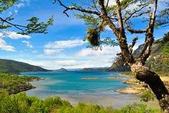 Wyrzucać na brzeg z błękitnym morzem w lesie z udziałami greenery zdjęcie royalty free