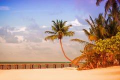 Wyrzucać na brzeg z molem i drzewkami palmowymi na Atlantyk wybrzeżu Obrazy Stock