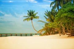 Wyrzucać na brzeg z molem i drzewkami palmowymi na Atlantyk wybrzeżu Obraz Royalty Free