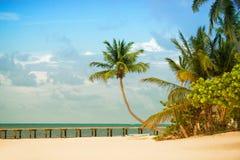 Wyrzucać na brzeg z molem i drzewkami palmowymi na Atlantyk wybrzeżu Fotografia Royalty Free