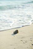 wyrzucać na brzeg koral Obrazy Royalty Free