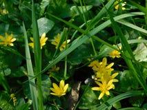 wysadź tła kwiat trawy zielonych wzgórz wysokich drzew wiatr łąkowego żółty fotografia stock