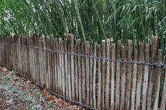 Wysocy badyle bambus za drewnianymi poczta wiązali z arkaną Zdjęcia Royalty Free