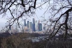 Wysocy budynki w tle w gałąź drzewa obraz stock