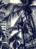 Wysocy drapacze chmur, przejścia i piękni drzewka palmowe, Drzewka palmowe zasadzający wzdłuż drogi zwrotniki Obrazy Royalty Free