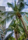 Wysocy drapacze chmur, przejścia i piękni drzewka palmowe, Drzewka palmowe zasadzający wzdłuż drogi zwrotniki Fotografia Stock