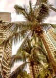Wysocy drapacze chmur, przejścia i piękni drzewka palmowe, Drzewka palmowe zasadzający wzdłuż drogi zwrotniki Zdjęcie Stock