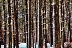 wysocy drzewa fotografia stock